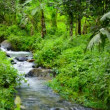 1080p video with sound - Stream in tropical forest after the rain. — Stock Video
