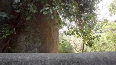 1080p video - Funny monkey sitting on a stone fence. Sri Lanka — Stock Video