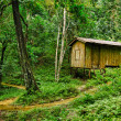 Wooden small house in a tropical forest — Stock Photo