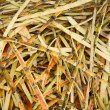 Waste from sugar production - sugar cane peels — 图库照片