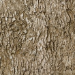 Bark of old deciduous tree - natural background — Stock Photo