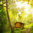 Wooden house in a tropical forest. Day and sunshine — Stock Photo