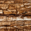 Completely rotted wood — Stock Photo