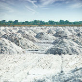 Place of salt production in India — Photo