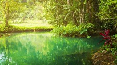 Küçük bir nehir ormanlarında video 1920 x 1080 - kumsalda — Stok video