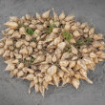 Burmese vegetables - root crops — Stock Photo