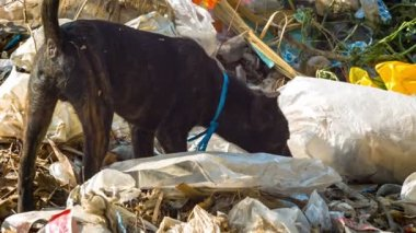 Video 1920x1080 - Stray dog looking for food in the dump — Stock Video