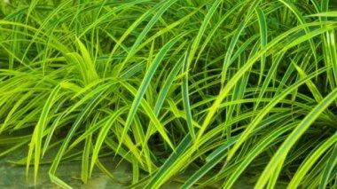 Video 1920x1080 - decorative vegetation — Stock Video