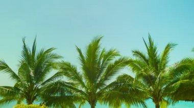 видео 1920 x 1080 - голубое небо выше верхушки кокосовых деревьев на тропическом пляже — Стоковое видео