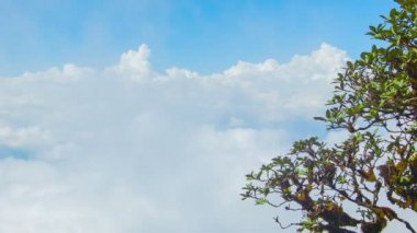 Video 1920x1080 - Tree on a background of clouds. View from the top of the mountain. Thailand, Chiang Mai — Stockvideo