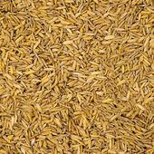 Rice seamless grunge pattern - natural background — Stock Photo