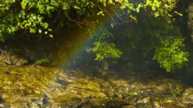 Video 1080p - Rainbow over the creek near the forest waterfall — Stockvideo