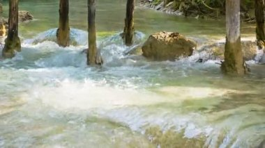 Video 1080p - Kouang Si Waterfall, Laos, Luang Prabang. Water pours over calcareous soil between the tree trunks — Stock Video