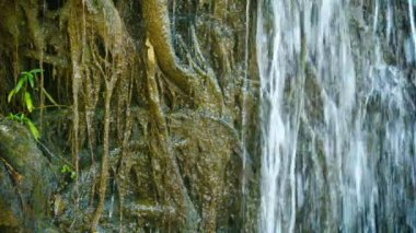Video 1080p - Water pours over the roots. Tropical waterfall close up — Stock Video