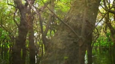 Video 1080p - The flooded forest. Cambodia — ストックビデオ