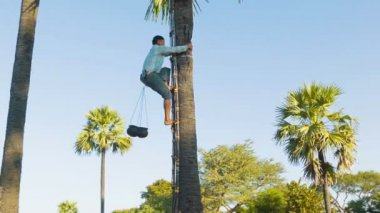 BAGAN, MYANMAR - 12 JAN 2014:  Man climb up on a tree for traditional palm juice collection — Stock Video