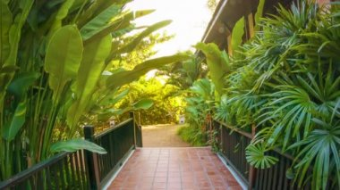 Video 1080p - Path at the hotel decorated with tropical vegetation. — Stock Video