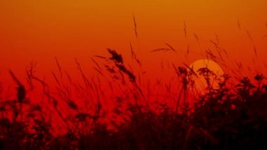 Video 1080p - Meadow grass against the setting sun. Silhouettes. — Stock Video