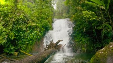 Video 1080p -  small waterfall in the rainforest — Stockvideo