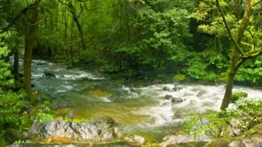Video 1080p - Small river in the forest, near the waterfall. — Stock Video