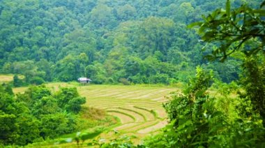 Video 1080p - Rice fields in the woods. Chiang Mai, Thailand — Stockvideo
