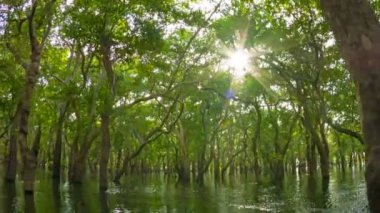 Video 1080p - Flooded forest, the view from the boat. Cambodia. — Stockvideo