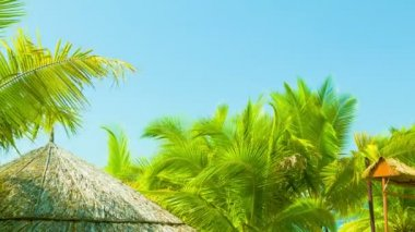 Video 1080p - Bungalows roofs and palm trees on the tropical coast — Stock Video