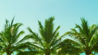 Video 1080p - Several tropical palm trees against the sky — Stock Video