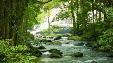 Video 1080p - Mountain stream near a waterfall in the rainforest — Stockvideo