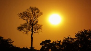 Video 1080p - Big tree in the jungle on a hot day, amid orange sky. — Stock Video