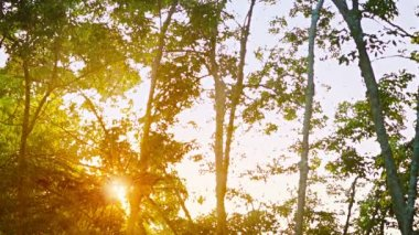 Video 1080p - The sun's rays shine through the trees in the tropical forest — Stock Video