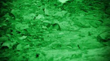 Video 1920x1080 - Night pest - rat. Imitation night vision device — Stock Video