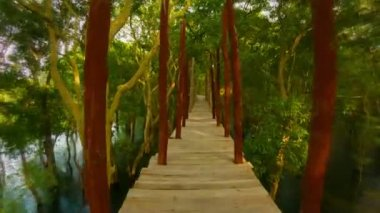 Video 1920x1080 - Go on a wooden bridge over the water in the bush. Cambodia — Stock Video