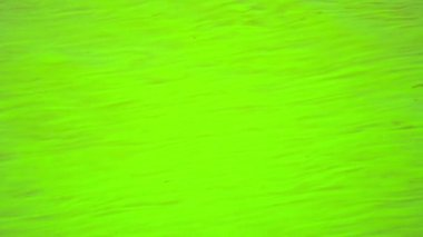 Video FullHD - water is green in a warm pond. Filamentous algae. — Stock Video