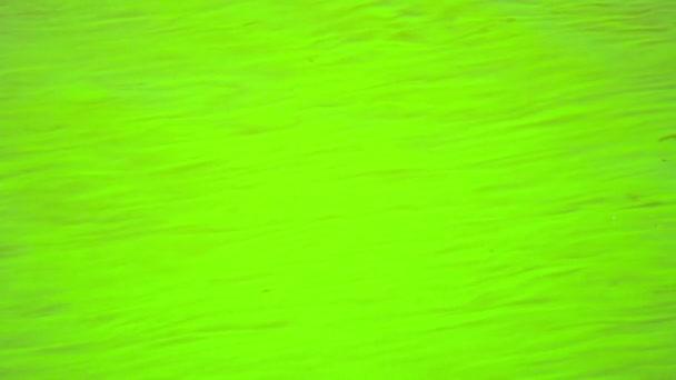 Vídeo fullhd - el agua es verde en un estanque caliente. algas filamentosas. — Vídeo de stock
