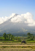Mayon Volcano — Stock Photo