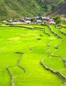 Rice terrace — Stock Photo