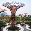 Постер, плакат: Gardens by the Bay at dusk