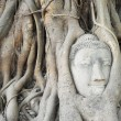 Buddha head's in tree roots — Stock Photo