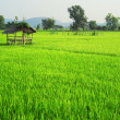 Thailands rise fields - Stock Photo