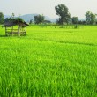 thailands rise fields — Stock Photo