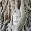 Head of Buddha — Foto Stock #27942885