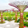 Stock Photo: Gardens by the Bay aerial