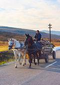 Man driving horse cart — Stock Photo