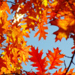 Autumn leaves — Stock Photo #12419643