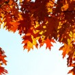 Autumn leaves - Stockfoto