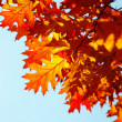 Autumn leaves — Stock Photo #12420764