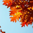 Autumn leaves  — Stock Photo #12420888