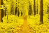 Vía de otoño — Foto de Stock