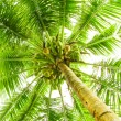 Leaves of palm tree — Stock Photo #12742205